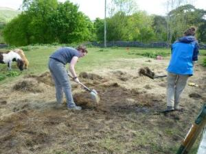 First stage at New Hall – removing the hay layer!